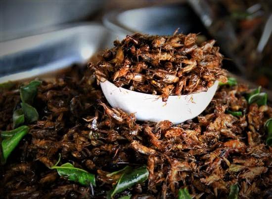 Makanan Thailand Ekstrim Menjadi Laris Bagi Wisatawan